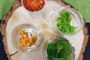 bar-plantes-deguster-verrines